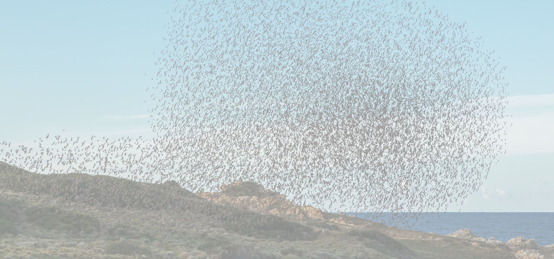 Managing Self-Organizing Teams - murmuration of birds photo